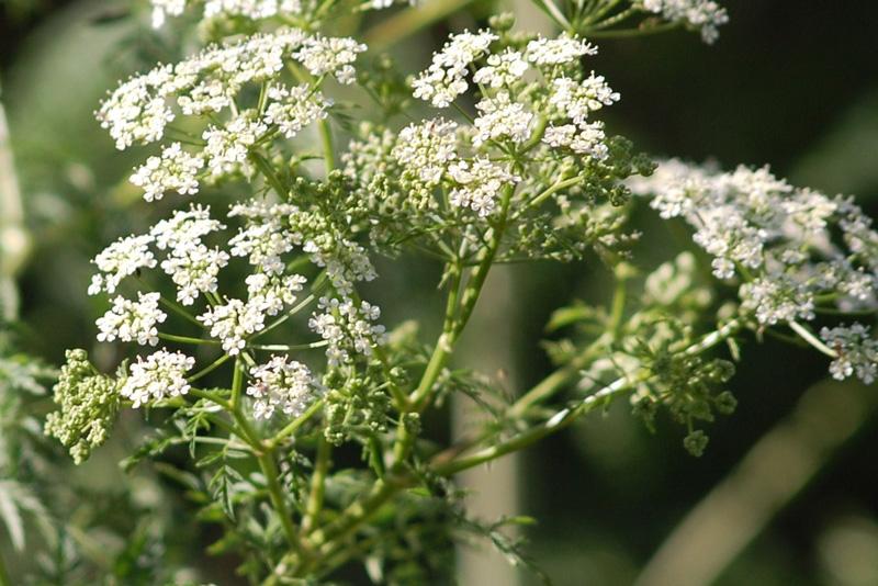 عوارض گیاهان دارویی
