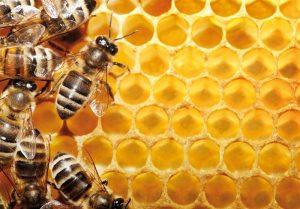 عسل ودارچین