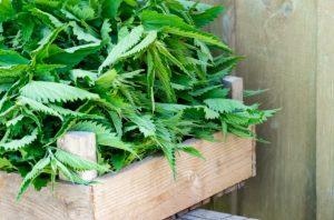 دمنوش گیاهی